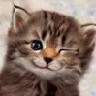 Аватар для roman.trotskiy
